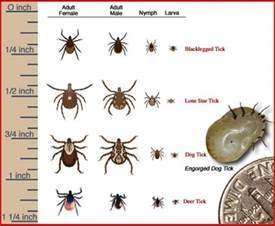 Mosquito Spray For Backyard Fyi Know Your Ticks Tick Species That Transmit Lyme