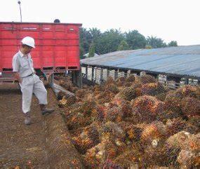 Daftar Minyak Kelapa Sawit dinas perkebunan provinsi kalimantan timur