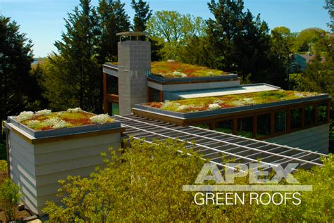green roof apex green roofs professional green roof design