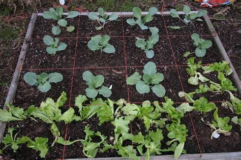square vegetable garden homestead square foot gardening
