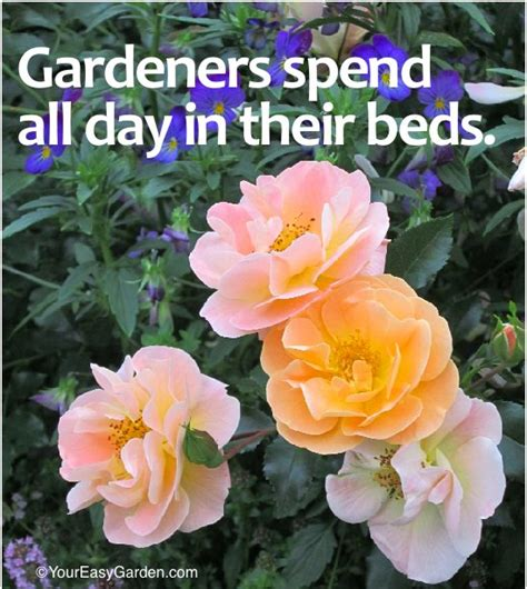 new year garden favorite gardening quotes for the new year your easy garden