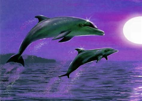imagenes de amor animadas de delfines delfines noche fondo escritorio delfines noche wallpaper