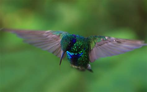 colibr fondos de pantalla 1920x1200 432 colibri full hd fond d 233 cran and arri 232 re plan 1920x1200
