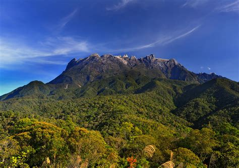 Mountain To Mountain tropical mountain diversity species rise from below but