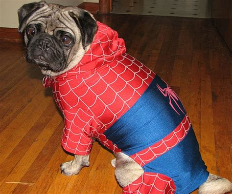 pug dressed as batman pugs dressed as characters for photos scopecube