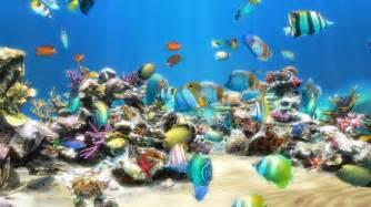 live aquarium hd 1 0 screensaver window screenshots for live aquarium