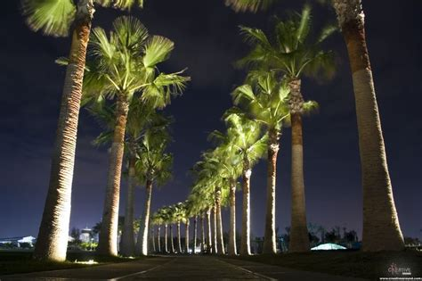 Tree Landscape Lighting Uplighting Landscape Palm Tree Row The Light