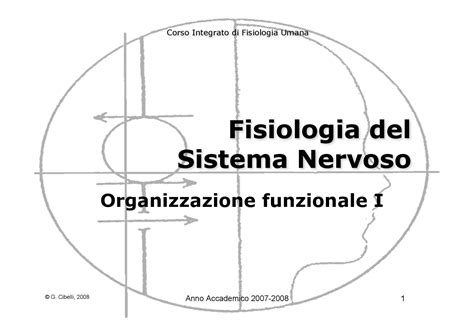 dispense anatomia umana fisiologia ii sistema nervoso organizzazione funzionale