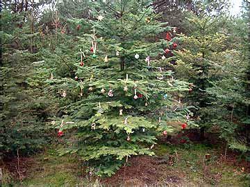 stadtblog karlsruhe freiheit dem weihnachtsbaum