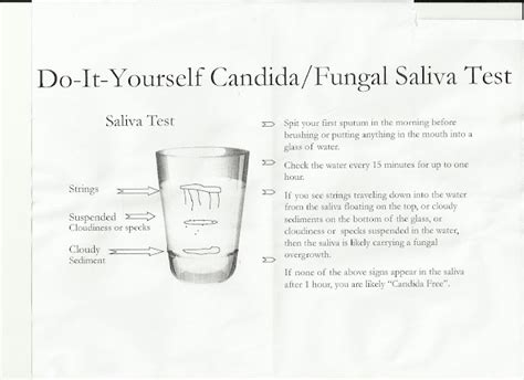 test saliva candida discover and save creative ideas