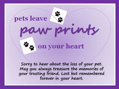 comforting words for loss of a pet cat sympathy quotes quotesgram