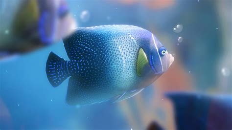 beautiful wallpapers  desktop beautiful fishes hd