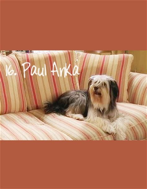 paul anka puppy 17 best images about gilmore on graham rory and logan and