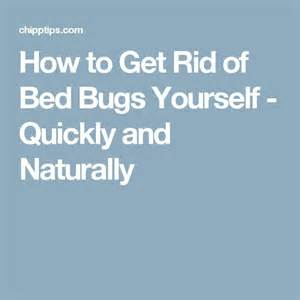 kill bed bugs yourself mais de 1000 ideias sobre bed bugs treatment no