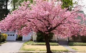 req pink trees mods discussion minecraft mods