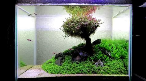 how to make aquascape my aquascape quot our lovely tree quot 28l youtube