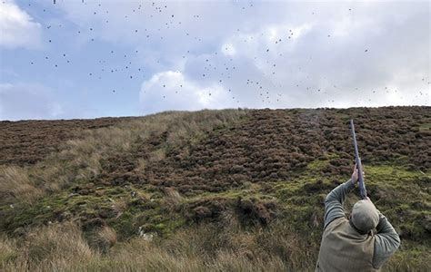 how to a pheasant how to shoot pheasants like george digweed the field