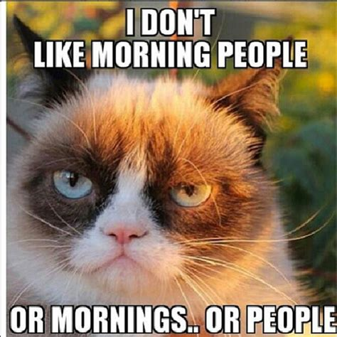 Not A Morning Person Meme - grumpy cat p via facebook image 801615 by alroz on