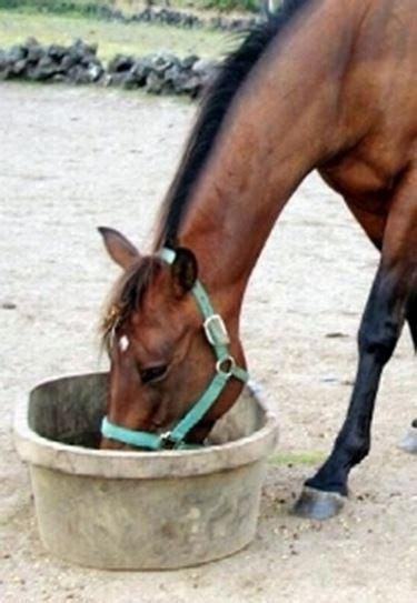 alimentazione per cavalli alimentazione cavallo cavalli