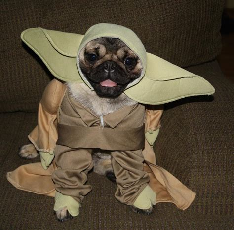 pug seal costume pug in yoda costume pictures to pin on pinsdaddy