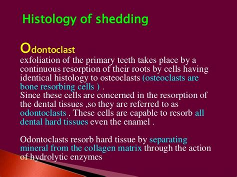 Meaning Of Shedding by Shedding Of Deciduous Teeth