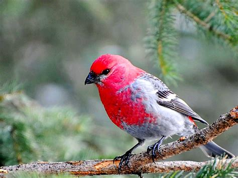 most beautiful pink bird birds pictures litle pups