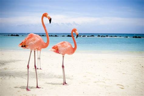 40 Beautiful Pictures of Pink Flamingo Birds   Tail and Fur