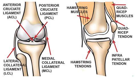 diagram of knee ligaments knee diagrams to print diagram site