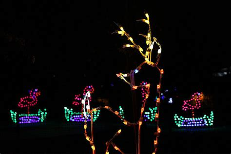 henry vilas zoo christmas lights catching up zoo lights a major success local news