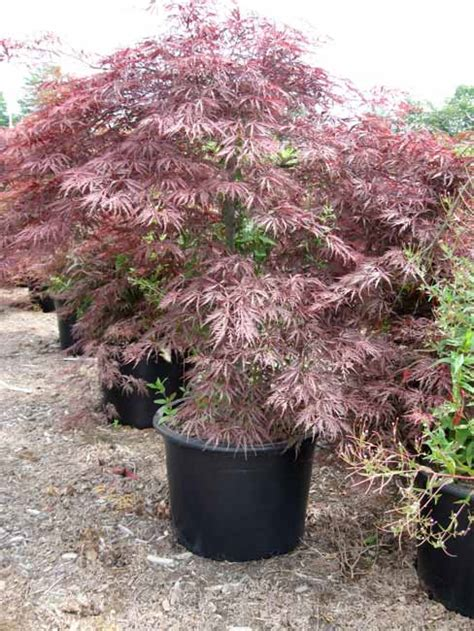 tree container gardening vancouver 778 323 1502 professional landscaping