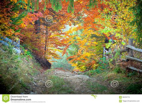 amazing color for the fall landscape landscaping ideas amazing vibrant autumn fall colors in forest landscape and