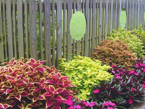 sun garden ideas coleus basics hgtv