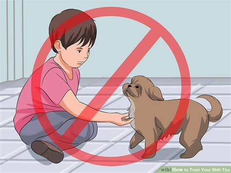 how to my shih tzu how to your shih tzu 12 steps with pictures wikihow