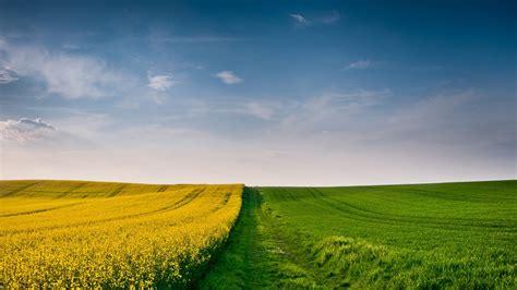 landscape field nature sky yellow flowers grass
