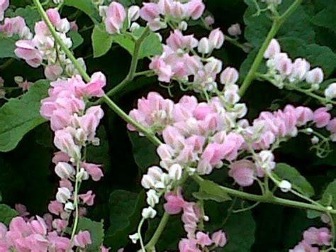 cadena de amor up cadena de amor beautiful flowers pinterest