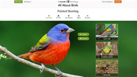 redesigning our online species guide a look at what s new