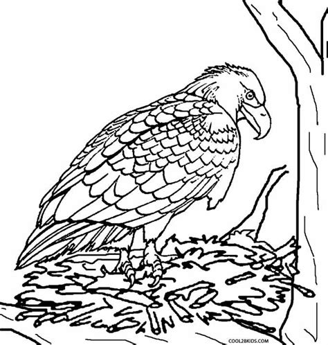 baby eagle coloring pages baby eagle coloring pages coloring pages for kids and