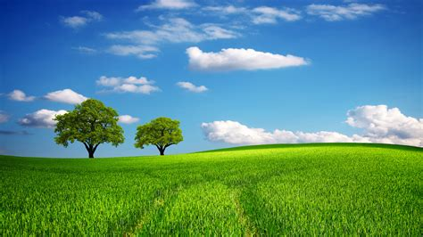 wallpaper green field green fields screensaver animated wallpaper