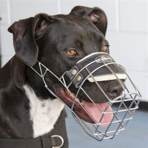muzzle for pitbull wire muzzle for pit bull terrier wire muzzle for pitbull
