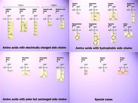 clasificacion de los aminoacidos segun sus cadenas laterales em leccion 3