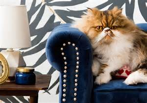 this cat s bedroom is better than yours gallery for gt sam and cat bedroom cats side