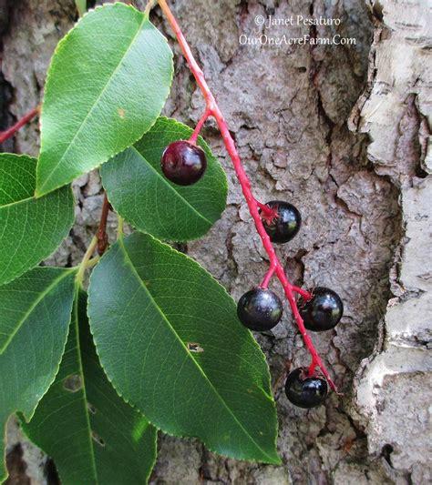15 trees for a wildlife friendly edible landsape