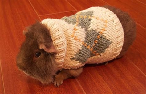 Animal Pullover animals in sweaters