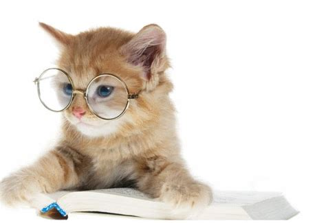 wallpaper animasi kucing bergerak gambar animasi kucing auto design tech