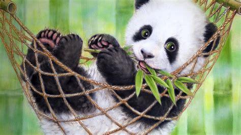 images of panda bears baby panda wallpaper 2018 screensavers