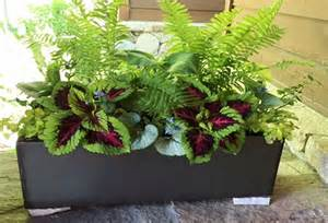 in door plants pot three four plants argements hill and dale landscapes indoor outdoor potted plants