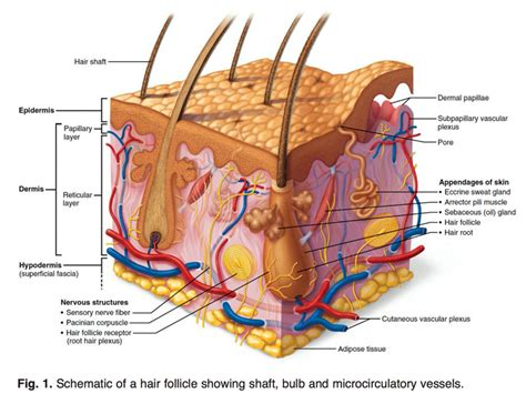 how to strengthen hair follicles in females over 40 reversing age related hair loss and restoring healthy hair