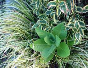 What Are Foliage Plants - foliage plants