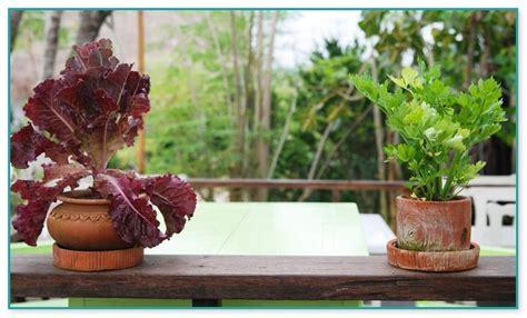 Patio Vegetable Garden Containers Indoor Container Vegetable Garden