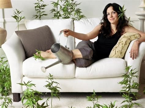 on the couch tv show super potent pot operation a real life weeds or breaking